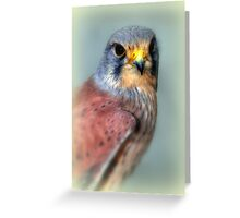 Common Kestrel Greeting Card