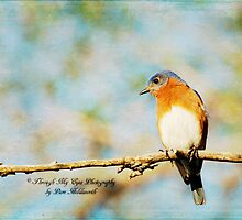 Mr. Bluebird by Pamela Holdsworth