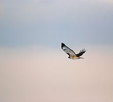 Flee the Wind by Bree Waltman