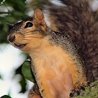 Fox Squirrel by Keala