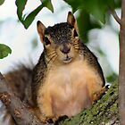 Cautious Squirrel by Keala