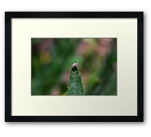 Stand Out in the Crowd Framed Print