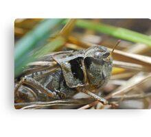 Jiminy Cricket Metal Print