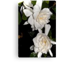 Gardenia After Dark Canvas Print