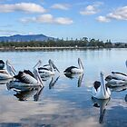 Pelicans at Wagonga Inlet by TonySlattery