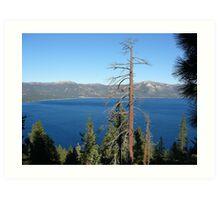 Trees Overlooking Tahoe Art Print