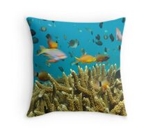 Hard Coral and Fish - Lombok, Indonesia Throw Pillow