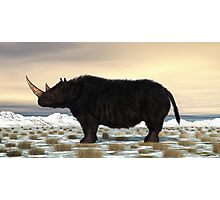 Woolly Rhinoceros Photographic Print