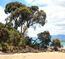 Hawley Beach.... Tasmania by SharonJH
