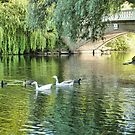 Stanley Park Boating Lake. by Lilian Marshall