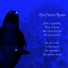 The Patient Raven by RangerRoger