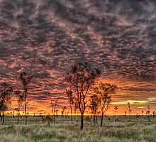 Sunset Alight by Dianne English
