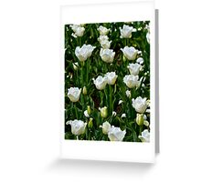 A field of frilly tulips in colour Greeting Card