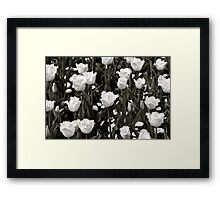 A field of Frilly Tulips in B&W Framed Print