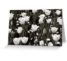 A field of Frilly Tulips in B&W Greeting Card