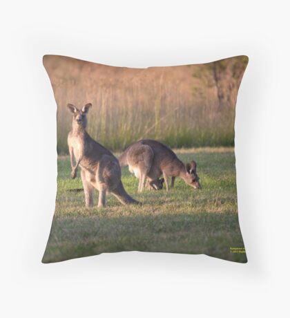 Kangaroos and baby Joey grazing at Vacy, NSW Australia Throw Pillow