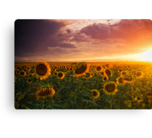 Colors Of A Late Evening II Canvas Print