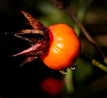 Rose Hip 05/06/13 by pennyswork
