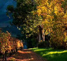 Road less travelled by Riana222