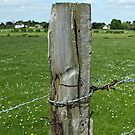 Old Fence Post, Dorchester, England by Ludwig Wagner