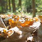 Leaves by MatMartin