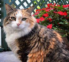 Hemingways' Cat by Brendan Buckley