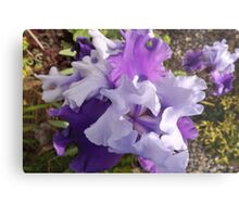 Lavender's Blue, Dilly Dilly Metal Print