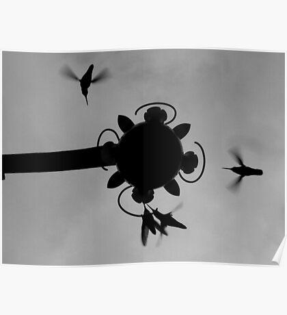 Hummingbirds #3 Poster