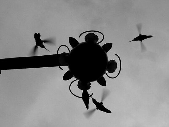 Hummingbirds #4 by Jess Meacham