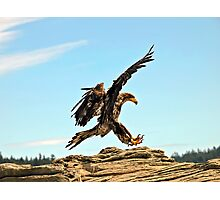 Bald Eagle Landing Photographic Print