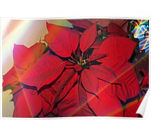 Poinsettias by stained glass windows Poster