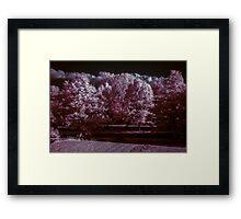 Forrest for the Trees Framed Print