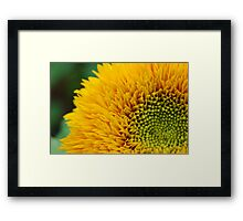 Burst of Yellow Framed Print