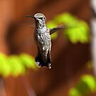 Backyard Hummer by Jeff Clark