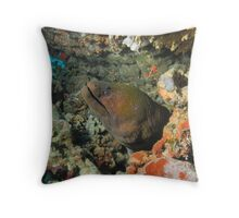 Moray Eel - Gili Trawangan, Lombok Indonesia Throw Pillow