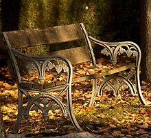 Autumn Serenity by Jennifer Saville