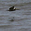 Lead Pelican by Paula Tohline  Calhoun