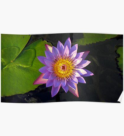 Lotus ! Poster