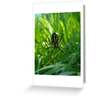 In the web of a spider Greeting Card