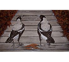 Magpies on The Board Walk Photographic Print