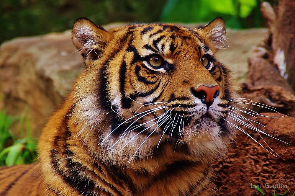Eye of the Tiger by Len  Gunther