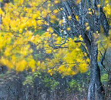 Maple tree with yellow leaves at night by Davis Drazdovskis