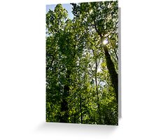 Summer trees Greeting Card