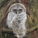 Barred Owl Chick by Carl Olsen