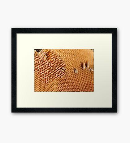 Hexagonal Honey Home Framed Print
