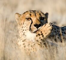 Happy Kitty - Namibia Africa by Beth  Wode