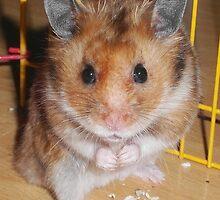 Hamster Barney by SkatingGirl