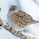 winter bird scene by Andrew Jones