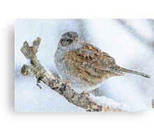 winter bird scene Canvas Print
