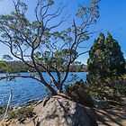 Lake Dobson, Tasmania #2 by Elaine Teague